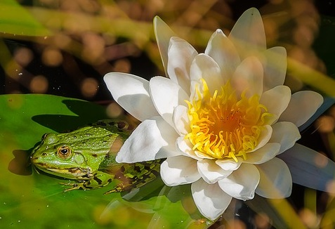 Austin Party Psychic, Tarot Readings, Animals, Pets, Frogs